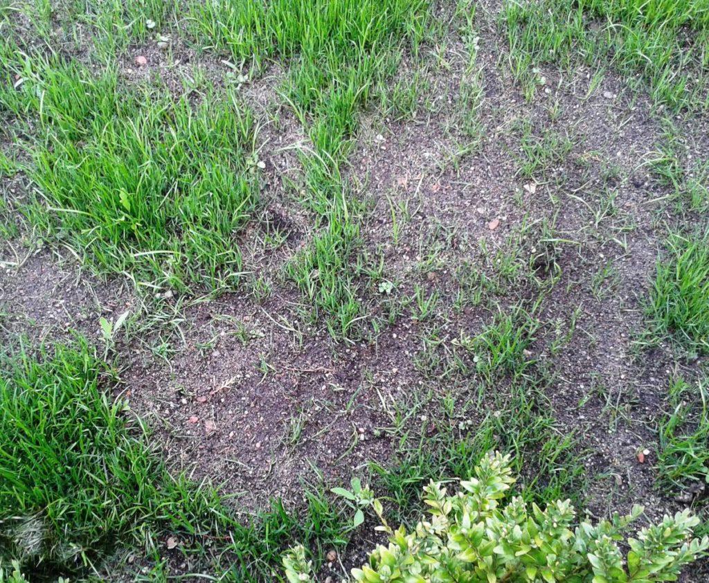 Как понять газон ли это