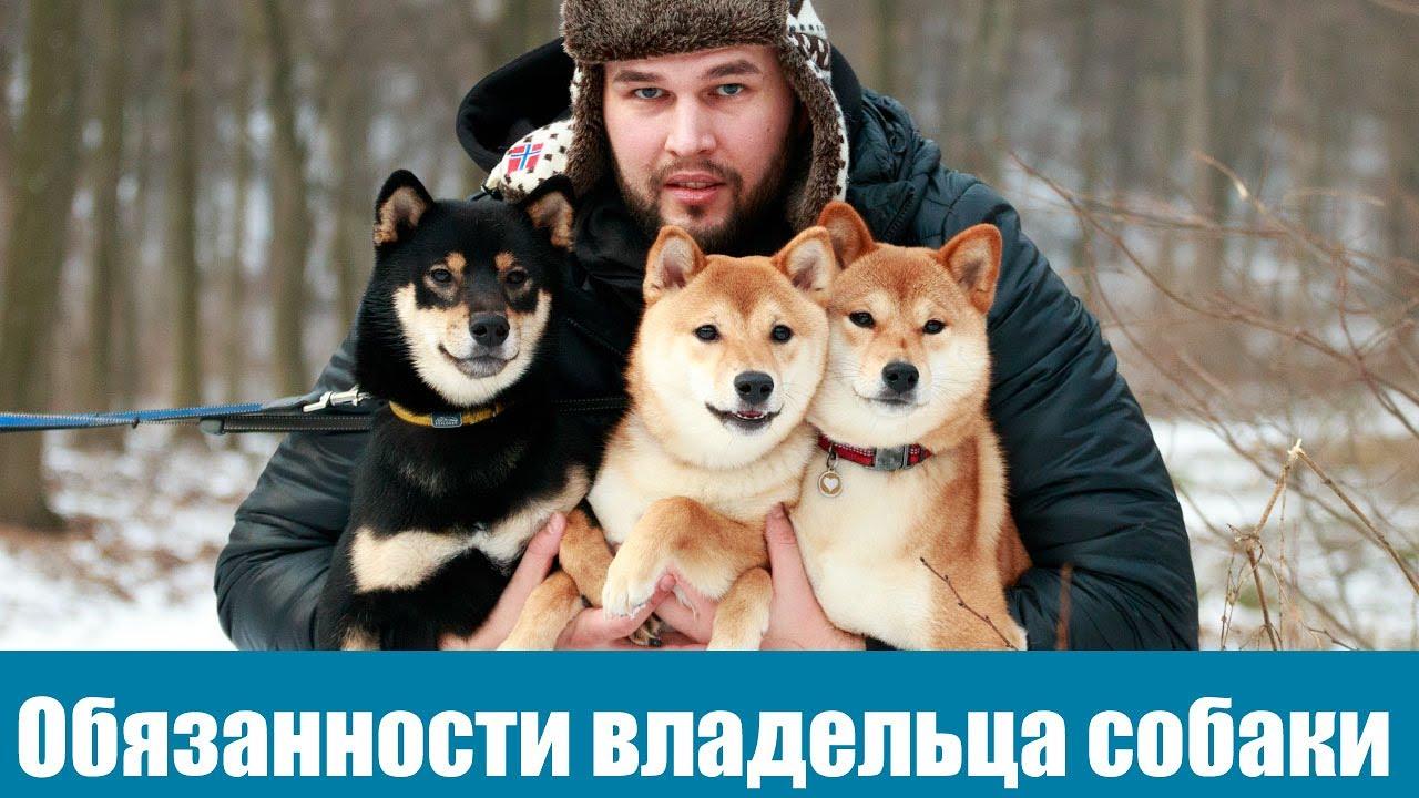 Обязанности владельцев собак